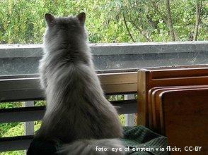 Maca gleda kroz prozor